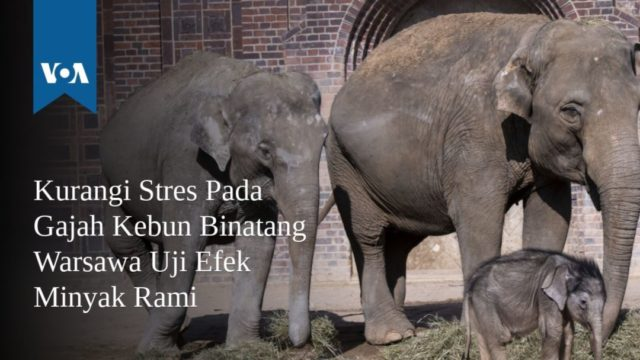 Sumber Foto; VOA Indonesis